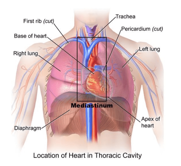 Thoracic Surgery Chart of Thoracic Cavity
